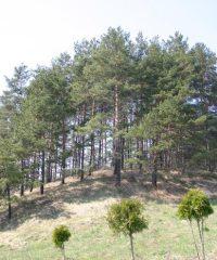 Bradesių piliakalnis