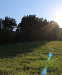 Dauliūnų piliakalnis