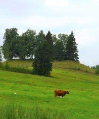 Petrešiūnų piliakalnis