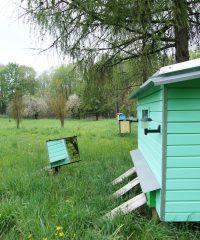 Дендрологический набор и пчелиная кровать в Тервиджяй