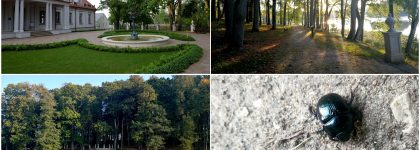 """Edukacinė ekskursija """"Žmogaus ir gamtos darna Ilzenbergo dvaro parke"""""""
